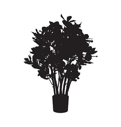 Office and house plant Ficus silhouette vector image