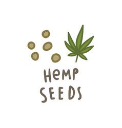 hemp seeds superfood vector image vector image