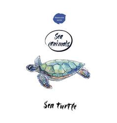 sea turtle watercolor vector image