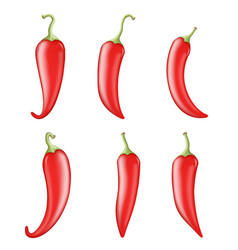 cook ingredient raw vegetable red hot chili pepper vector image