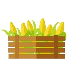 Fresh Corn at the Market vector image vector image