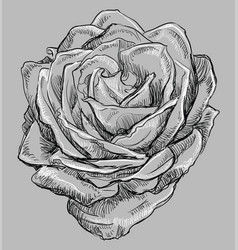 Grey flower 4 vector