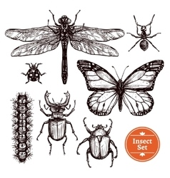 Hand Drawn Insect Set vector image