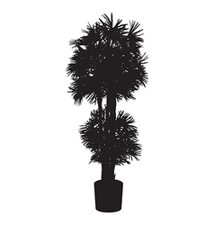 Office and house plant palm silhouette vector