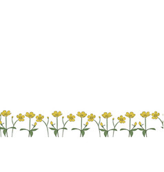 Seamless border isolated buttercup vector