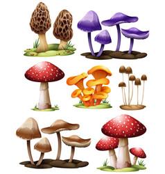Set of different mushrooms vector