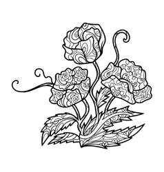 Poppy flower coloring book for adults vector image vector image