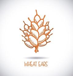 wheat ear vector image