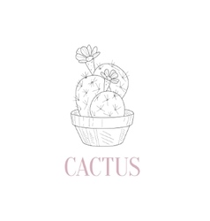 Cactus Home Plant Hand Drawn Realistic Sketch vector image