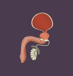 flat shading style icon male reproductive system vector image