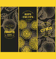 orange fruit banner set hand drawn fruit vector image
