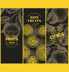 Orange fruit banner set hand drawn fruit vector