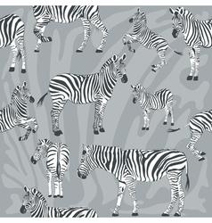 pattern with wild zebra vector image