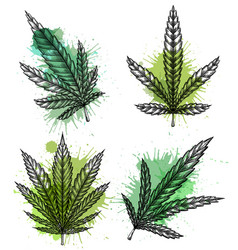 set of different leaves of marijuana with hatching vector image