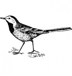 bird white wagtail motacilla vector image vector image