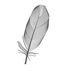 Black Bird Feather Drawn in vector image vector image