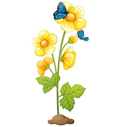 A plant with blooming yellow flowers vector image vector image