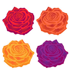 Beautiful multi-colored roses flower vector