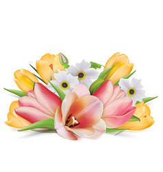 Bouquet of spring flowers tulips crocuses vector