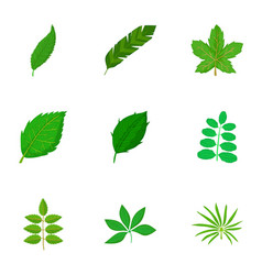 Green leaf icons set cartoon style vector
