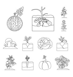plant vegetable outline icons in set collection vector image