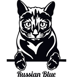 russian blue cat - cat breed cat breed head vector image