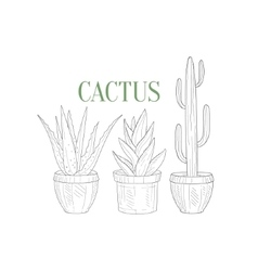 Three Tall Cacti In Pots Hand Drawn Realistic vector image