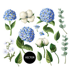 Hydrangea cotton flowers and eucalyptus branch vector