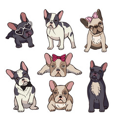 funny puppies of french bulldog vector image