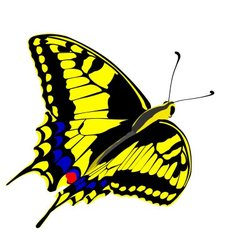 machaon butterfly vector image vector image