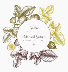 Design with hand drawn figs sketch vector