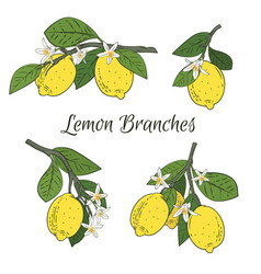 set collection branches with lemons green vector image