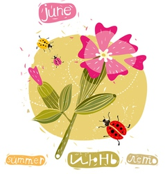 Summer flowers and bugs vector