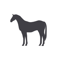 Black Horse isolated on a white background vector image