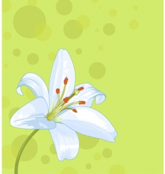 lily seamless card vector image vector image
