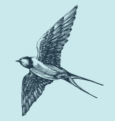 swallow in flight detailed hand drawing vector image vector image
