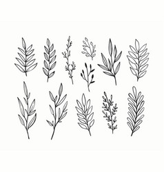 branches and leaves hand drawn floral vector image