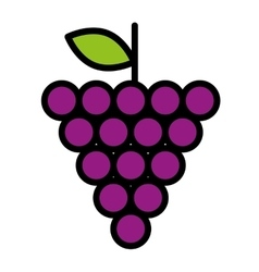 Fresh fruit grapes isolated icon design vector
