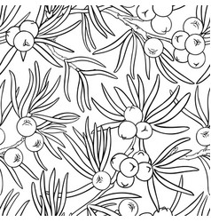 juniper branches pattern on white vector image