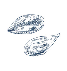 Mussel and clam seafood vector
