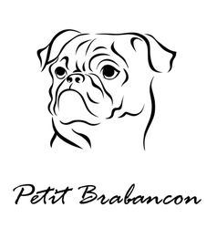 Petit Brabancon vector image vector image