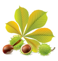 Autumn chestnuts vector