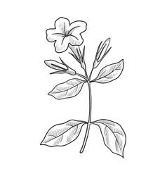 Drawing minnieroot vector