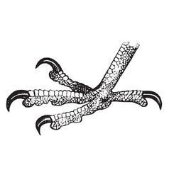Falcon foot vintage vector
