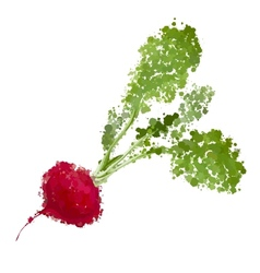 fresh radishes of blots vector image