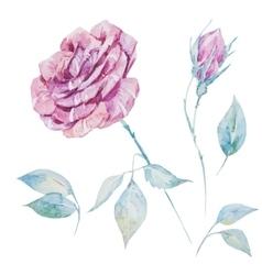Watercolor roses vector