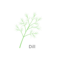 Bunch of fresh dill isolated on white background vector