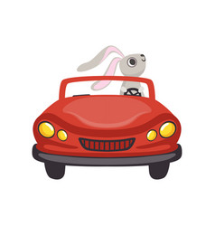 Cute little bunny driving vintage red car funny vector