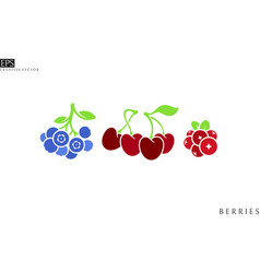 isolated cranberry blueberry and cherry with leave vector image