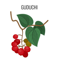 guduchi branch with red berries and leaves vector image vector image